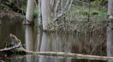 Kommunen skal give førstehjælp til flere vandløb