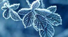 Torsdag kan ifølge TV2 Vejret starte med tåge og rimglatte veje