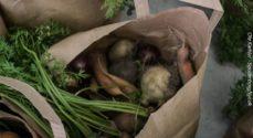 Nu kommer der et marked for lokale fødevarer
