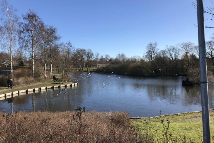 Slut med at fodre ænder og gæs ved Guderup Mose | SønderborgNYT