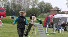 Åbent hus hos Danmarks civile Hundeførerforening i Broager