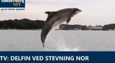 TV: Delfin ved Stevning Nor