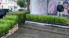 Sønderborg planter træer