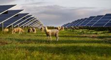 Better Energy: Biodiversitet og vedvarende energi går hånd i hånd