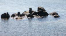 Strandbeskyttelsen er ophævet tre steder på Als