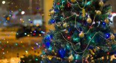 Dit juletræ kan genbruges - til sommer