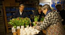 Køb en buket tulipaner og støt Lions' arbejde imod misbrug