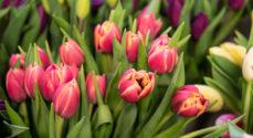Billeder: Lions-kvinder gør tulipaner køreklar