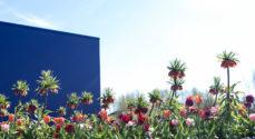 Bitten & Mads Clausens Fond støtter TV2s julekalender 2021