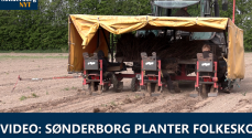 VIDEO: Sønderborg planter Folkeskov