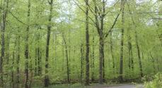 Skovvandringen i Oksbøl Skov er aflyst