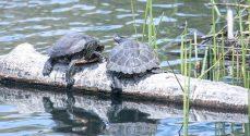 Billeder: Fugle, fisk og skildpadder