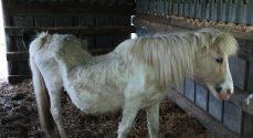 Kvinde på Broagerland skar halsen over på sin egen hest