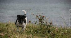Fødevarestyrelsen: Pas på dyrene i sommervarmen