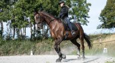 Rideskolen i Svenstrup holder et Knæk Cancer-stævne