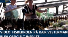 VIDEO: Fiskebroen på Kær Vestermark blev officielt indviet