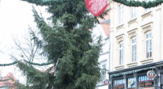 Billeder: Nu er juletræet på plads på Rådhustorvet